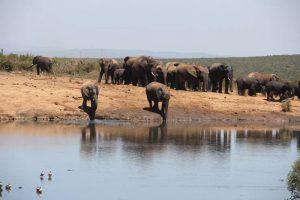 Erste Elefantenherde an einem größeren Wasserloch